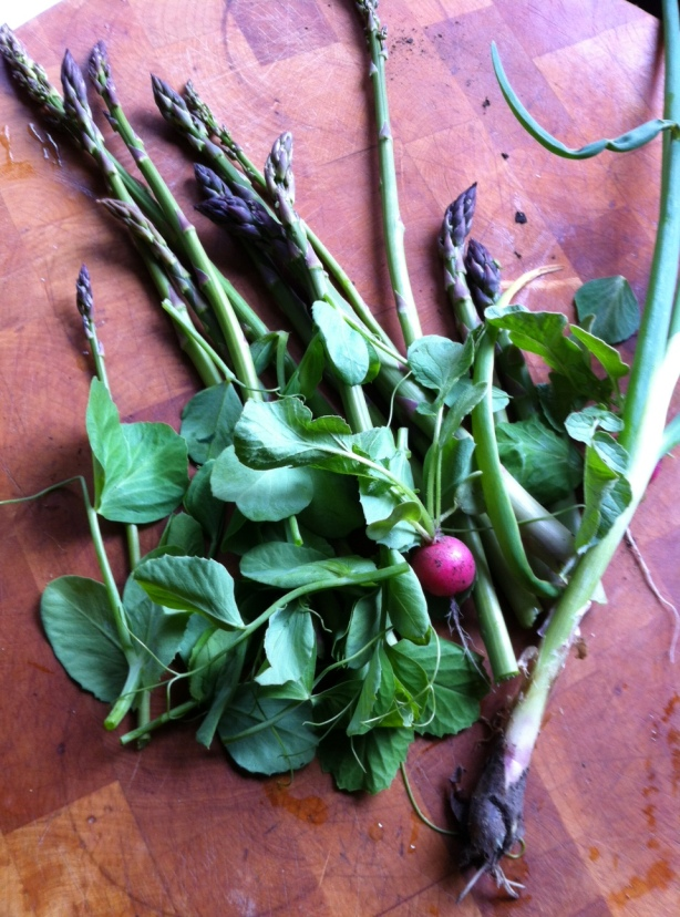 An early spring salad: asparagus, pea tendrils, radishes, scallions.