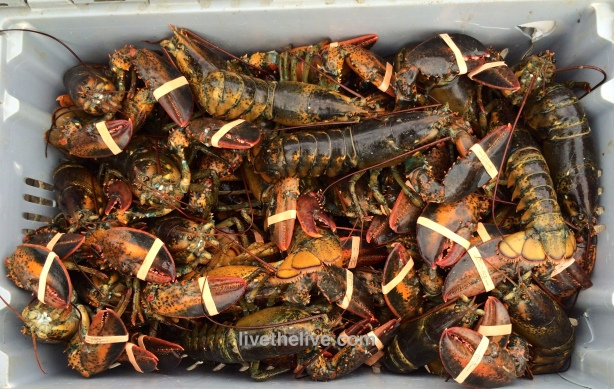 Lobster catch LTL