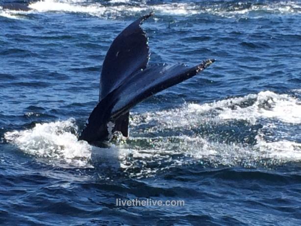 whale LTL