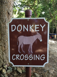 A sign at Honeymoon Beach. Hiking trails in this area have many wild donkeys, which were brought here in the 1600's from Spain to help in sugar cane harvesting.